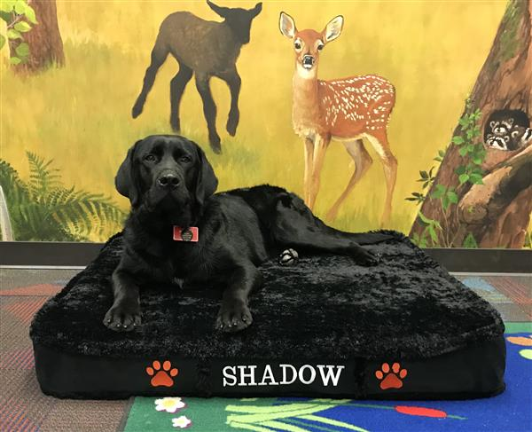 Shadow - Therapy Dog